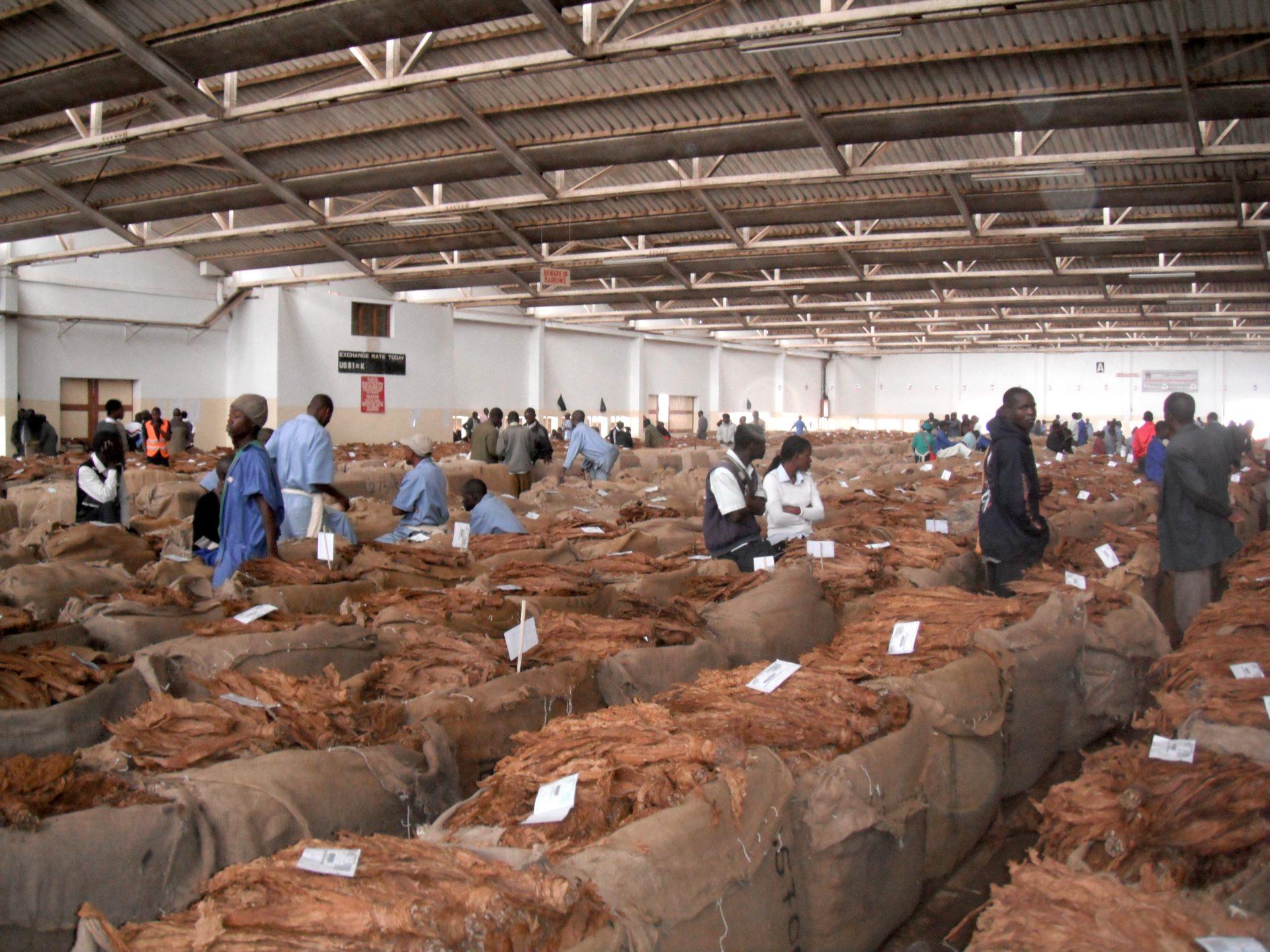 マラウィの首都リロングウェにおける葉タバコのオークション